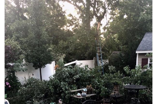Municipio de Riverhead recogerá durante la próxima semana escombros de jardines causados por la tormenta